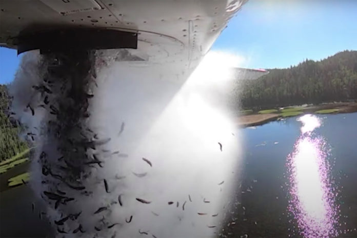 Thousands of fish dropped from plane into Utah lakes in video