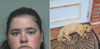 Michigan woman allegedly shot neighbor's cat with crossbow