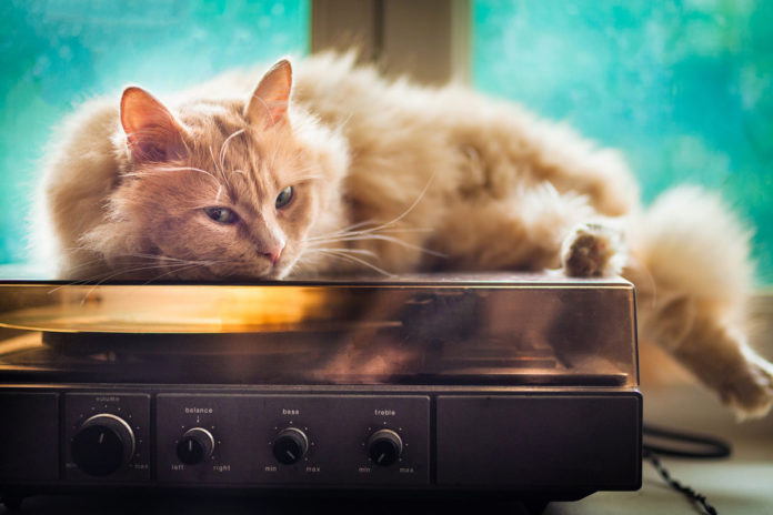 Police find cat home alone blasting music after noise complaint