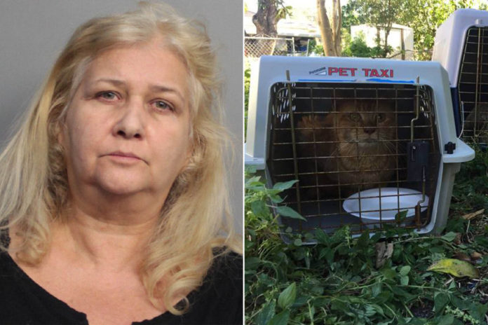 Animal rescue worker jailed for hoarding and starving cats