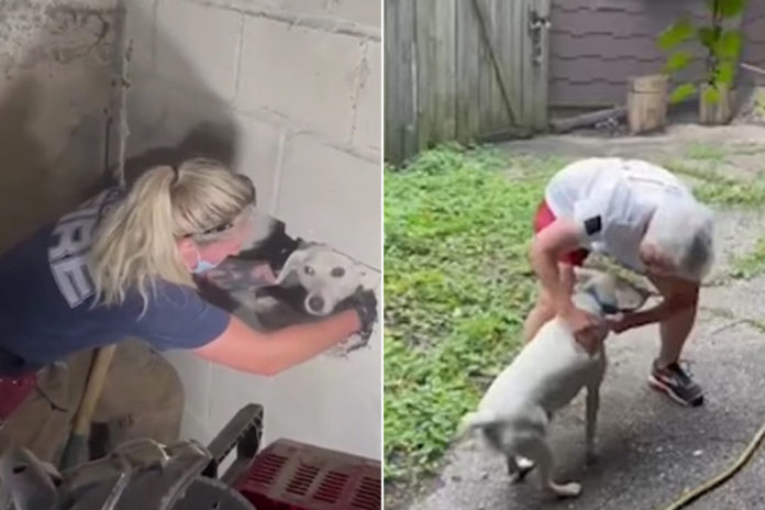 Ohio firefighters rescue dog trapped between two walls