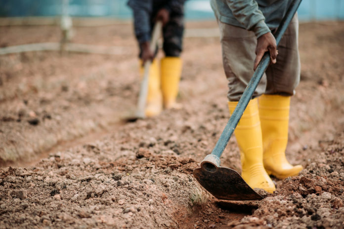 Facebook cracks down on discussing 'hoes' in gardening group