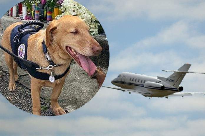 Surfside tragedy response dog flies home in donated luxury flight