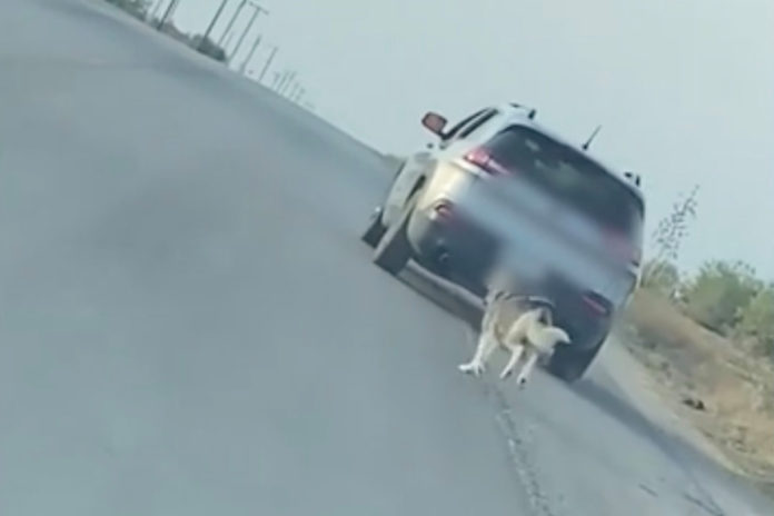 Dog abandoned on side of Texas road