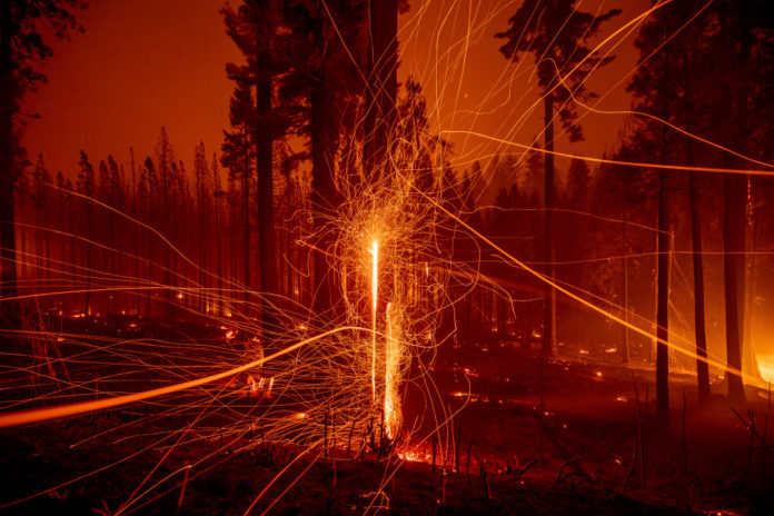 California wildfires force closure of national forests