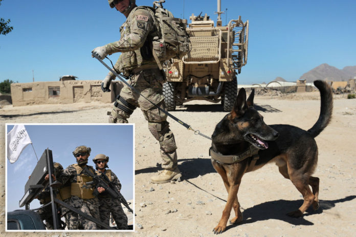 American Humane Society say US left military dogs behind in Afghanistan
