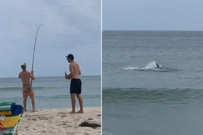 Man hooks great white shark while fishing from Cape Cod beach: video