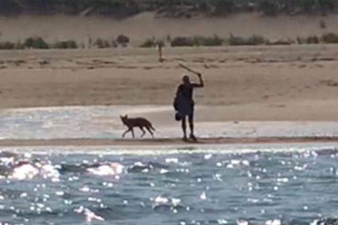 NYC assistant principal Marcy Sterlis fends off coyote in Massachusetts