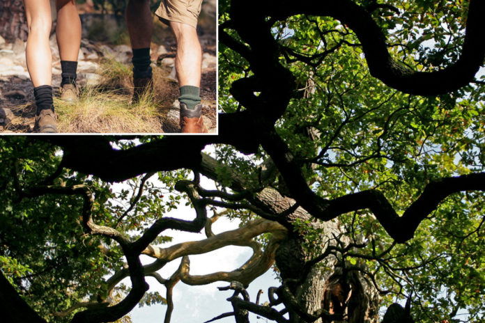 Robin Hood's hideout Sherwood Forest a haven for nudists, infuriating locals
