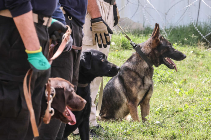 Abandoned dogs get new homes after Afghanistan withdrawal