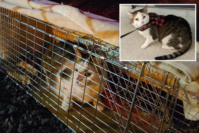 Long Island cat spent 3 weeks on JFK runways after escaping
