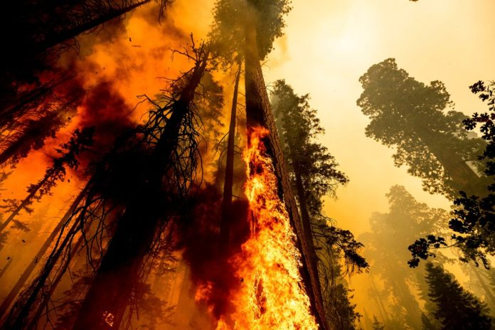 California wildfire could destroy giant sequoias