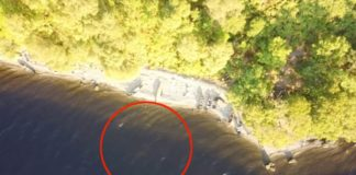 'Loch Ness Monster' spotted again! This time on drone footage