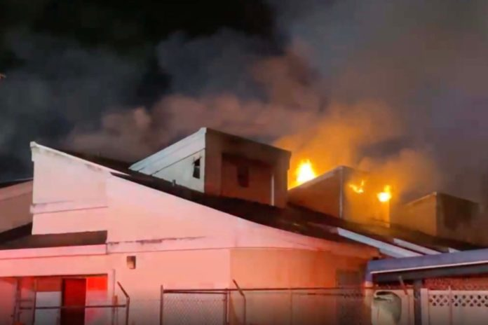 Florida animal shelter fire leaves 13 cats dead