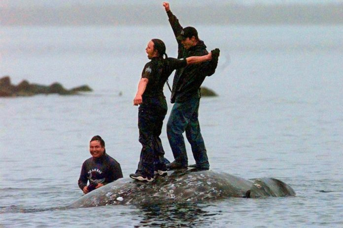 Tribe could resume whale hunt after 20-year battle with activists