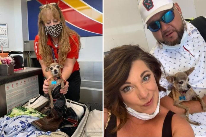 Couple finds their dog in luggage before flight to Las Vegas