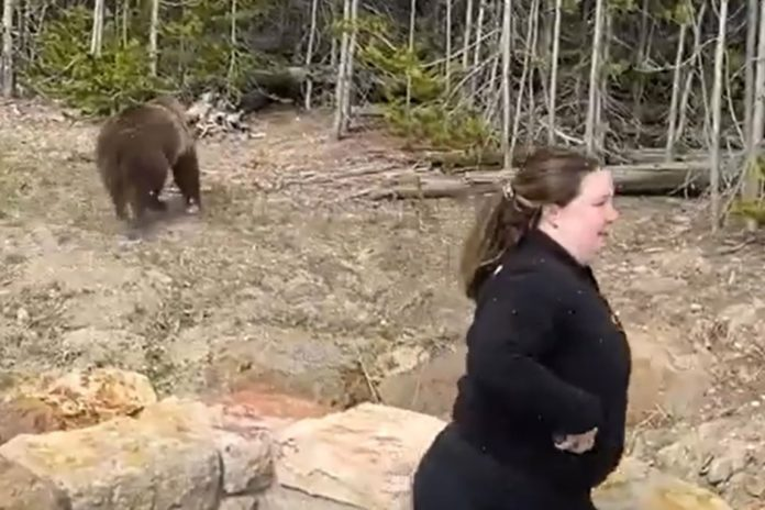 Woman gets jail time for grizzly bear encounter at Yellowstone