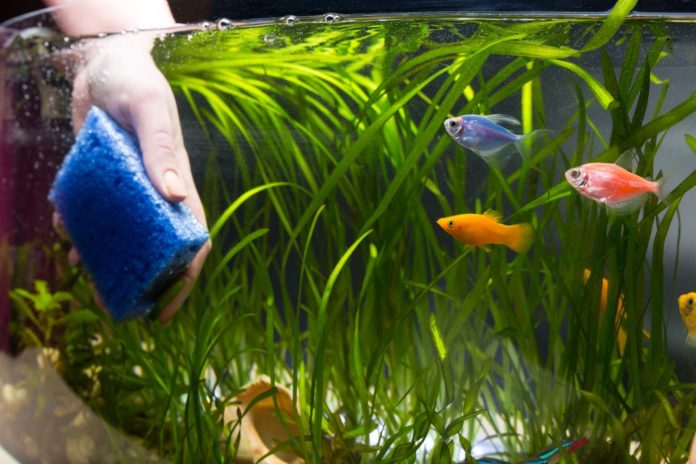 Maryland woman contracts melioidosis bacteria from fish tank